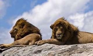 Belos Animais que Você Vê num Safári...