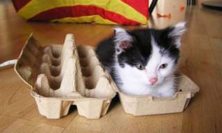 Gatos Que Não Resistem a Espaços Pequenos