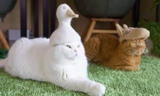 Esses gatos  adoráveis e seus elegantes chapéus