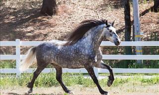 30 Raças de cavalos criados em todo o mundo