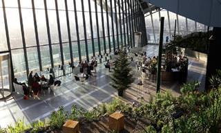 Conheça o Sky Garden, um Jardim Botânico Nos Céus de Londres!
