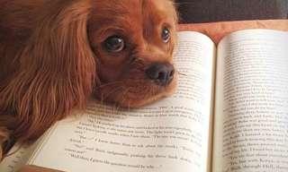 Justo Quando Você Quer Ler... Eles Não Deixam!