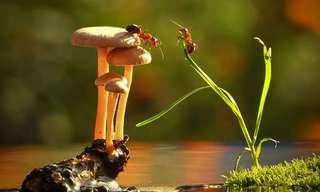 Vyacheslav Mishchenko e Seu Universo de Cogumelos