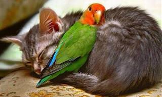 Animais Tiram Soneca Juntos e o Resultado é Muito Amável!