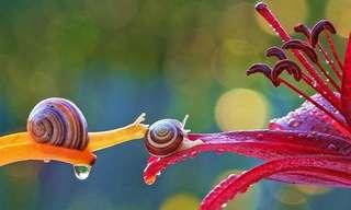 O Pequeno e Colorido Mundo dos Caracois