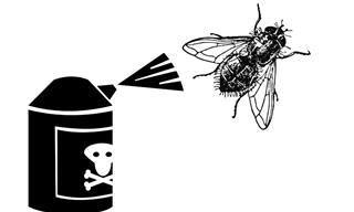As moscas apareceram na sua casa? Veja como se livrar delas!