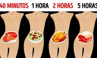 Quanto Tempo os Alimentos Ficam em Nosso Estômago?