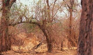 TESTE: Encontre os Animais Camuflados na Natureza!