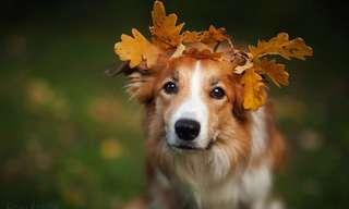30 Fotos Caninas Adoráveis Para Alegrar Seu Dia!
