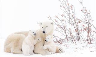 As Melhores Fotos do Concurso Anual de Vida Selvagem da Europa