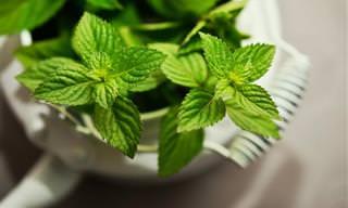 6 Benefícios da Hortelã-verde à Saúde