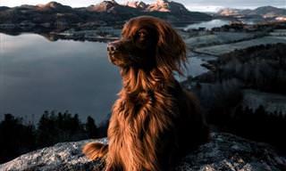 Belas Fotos de Exploração Do Cão Troja e George