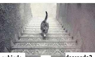 O Gato Está Subindo ou Descendo?