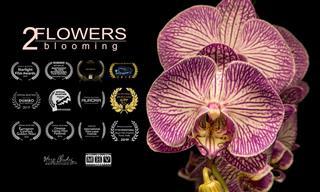 Beleza e magia no desabrochar das flores