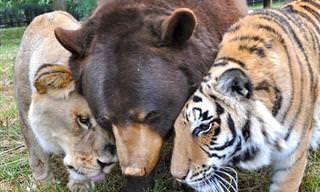 Os Animais Só Sabem Amar!