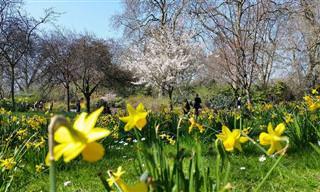 A Belezas das Flores da Primavera em Londres!