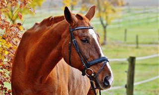 Piada Do Dia: Um Cavalo Especial