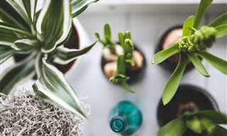 Purifique o Ar da Sua Casa Com Plantas