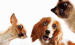 Os animais são mestres na arte de nos fazer rir!