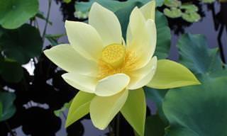 16 Flores e plantas exóticas encontradas na natureza