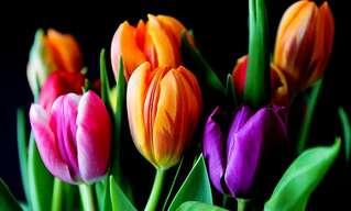 O Que Sua Flor Preferida Diz Sobre Você?