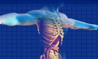 Os Efeitos da Idade na Sua Digestão
