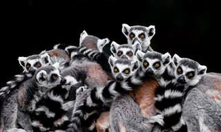 A arte de capturar em imagens a personalidade dos animais