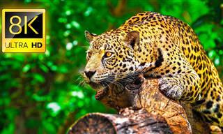 Embarque nesta experiência incrível da vida selvagem