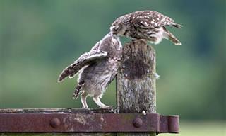 Um Beijo Para Mostrar Todo o Meu Amor e Afeto