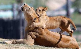 Independente de espécies, as mães são muito parecidas