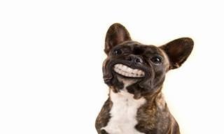 O Cachorro do Político