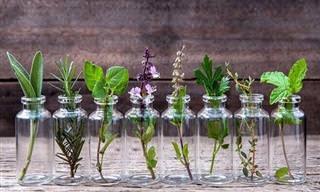 Como Cultivar Ervas e Temperos em Água