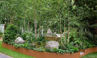 Grande Mostra de Primavera leva você a belos jardins