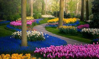 Keukenhof, o jardim de tulipas mais belo do mundo