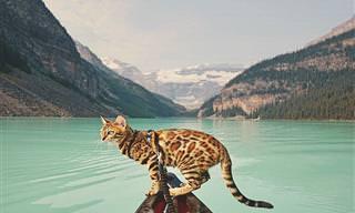 Conheça a Gatinha Viajante