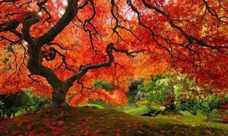 Árvores Tão Incríveis que Não Parecem Reais...