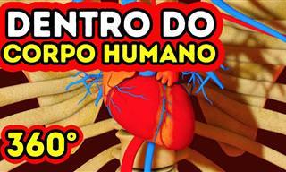 O que acontece dentro do seu corpo? Veja neste vídeo!