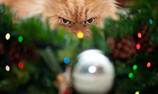 Nem todos os bichos curtem o Natal