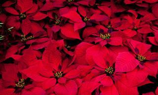 15 Flores para colorir sua casa ou jardim no inverno