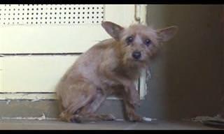 Cãozinho abandonado foi salvo e ganhou nova vida