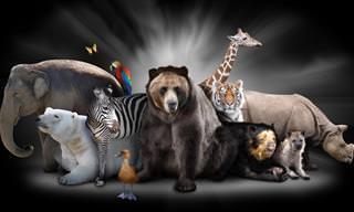 Teste: Qual é o seu animal de poder espiritual?