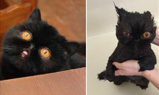 Animais antes e depois do banho!
