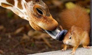 Os Animais Selvagens Mais Hilários da Natureza