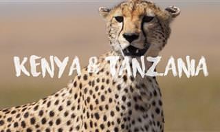 Vamos Viajar Pelas Vívidas Paisagens do Quênia e Tanzânia