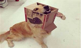 Cães Que Cometeram Grandes (mas Hilários) Equívocos