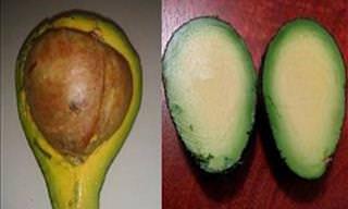 Os Alimentos Mais Inusitados Que Você já Viu!