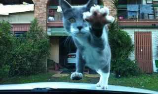 Quando os Gatos Piram.....