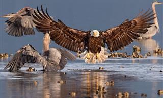 A Natureza é Linda: As Melhores Fotos de Pássaros do Ano!