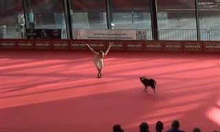 Eu nunca achei que fosse possível um cachorro fazer isso!