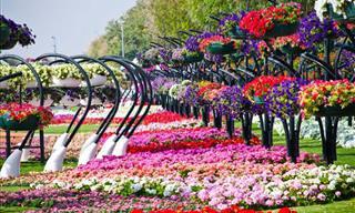 Encante-se Com o Jardim do ParaísoAl Ain nos Emirados Árabes